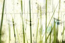 Green grass  von Christine  Vie