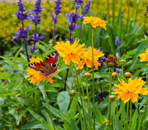 Peacock Butterfly von Louise Heusinkveld