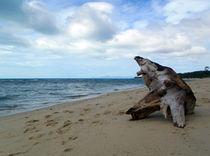 Baumspumpf am Strand von Thomas Brandt
