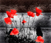 Urban Poppies 2 von Simon Gladwin