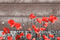 Urban Poppies 1 by Simon Gladwin
