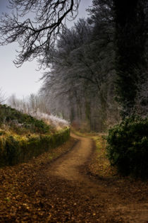 Winter Path von Simon Gladwin