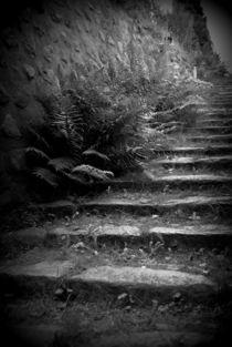 Farn im Treppenviertel Blankenese von Diana Hartmann