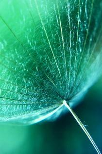 Schirm grün by Christine Bässler