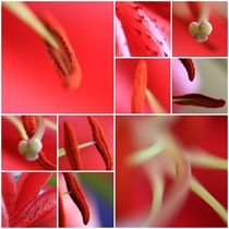 Rote Collage von ms-photographs