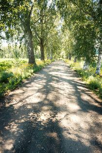 Birch alley von Kristiina  Hillerström