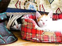 Meow! by Roberta Denicolo