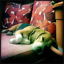 Dog Dream von gomatographie