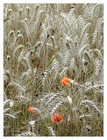 Getreide und Mohnblumen by Frank Wöllnitz