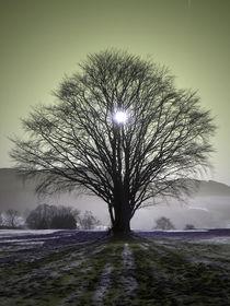 Sun behind Tree von Bjoern Buxbaum-Conradi