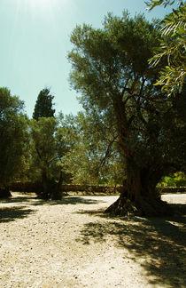 Old olive garden of Gortyn(Crete, Greece) von Lina Shidlovskaya