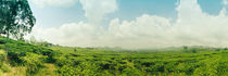 Tea plantation - Tee Plantage Panorama von Tobias Pfau