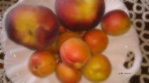 Aprikosen Pfirsiche 2 von badauarts