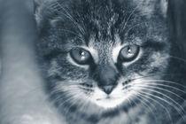 Kätzchen von Christine Bässler