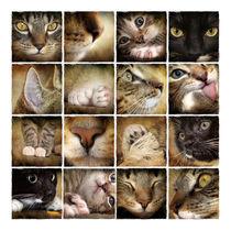 Kätzchen im Detail... von wredefotografie