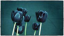 blue Tulips von Frank Wöllnitz