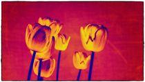 red Tulips von Frank Wöllnitz
