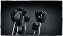 black Tulips by Frank Wöllnitz