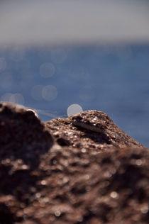 Spinneweben am Felsufer  von Mandy Siemon