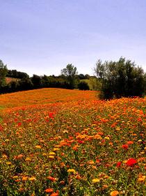 Blumenwiese auf Langeland von Mandy Siemon