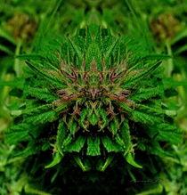 Gremlin Green von Panda Broad