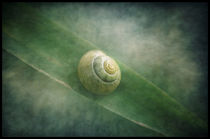 Shell in a sea of green... von Pauline Fowler
