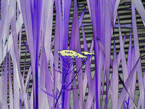 Flower amoung the Reeds von Pamela Rivera