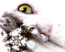 cats -2- von Christine  Hofmann
