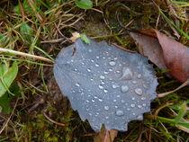Blatt mit Tautropfen by regenbogenfloh