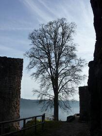 Baum auf Burg by Beatrice Mock