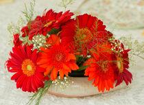 Gerbera-daisies0098