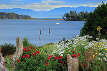 Sooke Harbour by Louise Heusinkveld