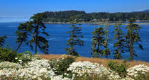 Sooke Harbour and the Strait of Juan de Fuca by Louise Heusinkveld