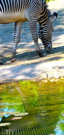 ZEBRA von © Ivonne Wentzler