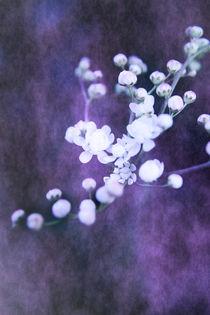 Weiße Blüten by Christine Bässler