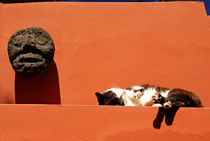 SLEEPING CAT Mexico City by John Mitchell