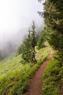 Mountain Trail by Paul Anguiano