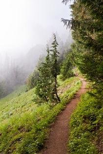 Mountain Trail von Paul Anguiano