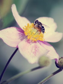 bzzz... Vintage Summer by syoung-photography