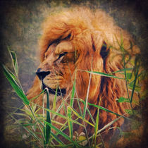 A Lion Portrait von AD DESIGN Photo + PhotoArt