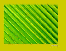 Green and Yellow Abstract von xoanxo