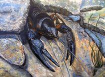 Flusskrebs von Elisabeth Maier