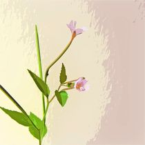 Broad leaf willow herb von sharon lisa clarke