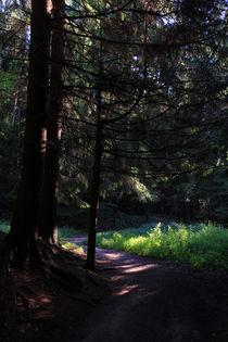 Wald von Wolfgang Dufner
