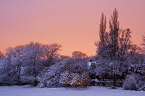 Snow Scene at Sunrise II by David Pringle