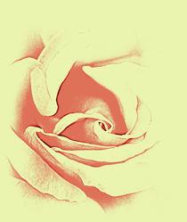 Rose sillouette von rosanna zavanaiu