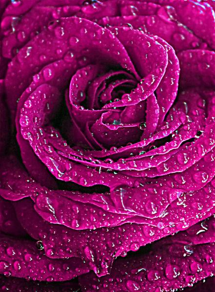 Redrose14