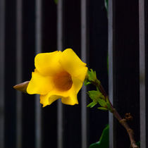 yellow flower trying to escape von Craig Lapsley
