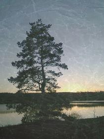 Dawn Sun by Sharon Harvey