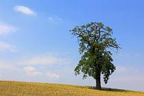 Baum im Feld by Wolfgang Dufner